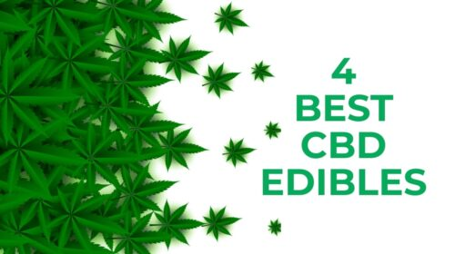 4 Best CBD Edibles One Should Try